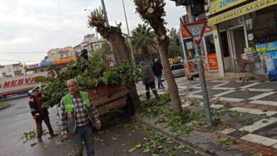 Photo of Viranşehir'de Ağaçlarda Çalışması Yapıldı