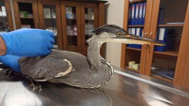 Photo of Şanlıurfa'da yaralı kuş tedavi altına alındı