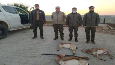 Photo of Urfa'da Ceylan Avcılarına Suçüstü