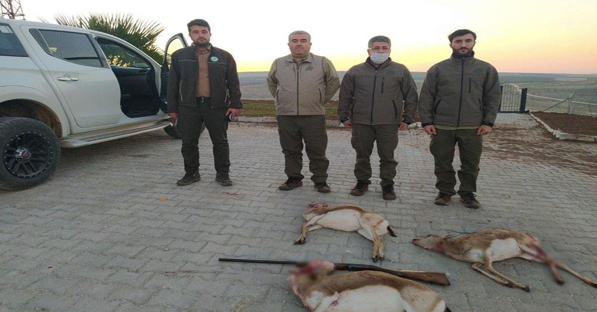 Urfa Ceylan Avcıları