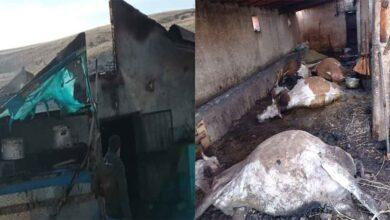 Photo of Çıkan yangında, 12 hayvanı telef oldu