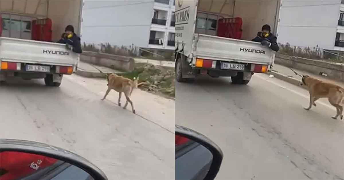 Köpeği kamyonetin arkasında sürükledi