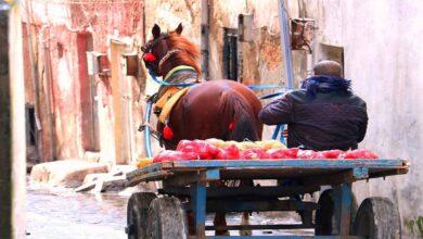 Photo of Şanlıurfa'da 40 yıldır at üstünde çalışıyor