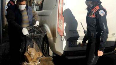 Photo of Boş Binada Köpeğe Tecavüz Ederken Yakalandı