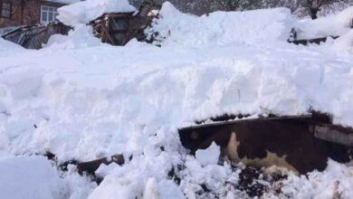 Photo of Yoğun kardan ahır çöktü, hayvanlar telef oldu