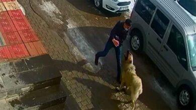 Photo of Kendisine saldıran köpeği yumruklayarak kurtuldu