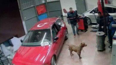 Photo of Tamirhanede pitbull paniği