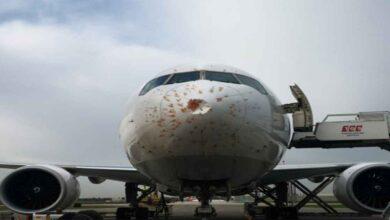 Photo of Kuş sürüsüne giren kargo uçağı acil iniş yaptı