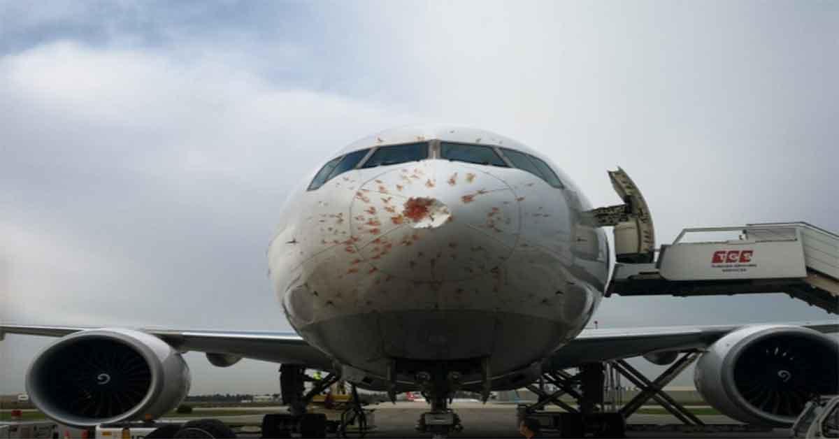 Kuş sürüsüne giren kargo uçağı acil iniş yaptı