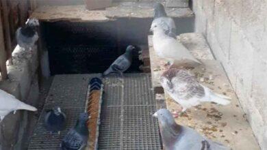 Photo of Urfa'da yakalanan 2 cinayetin şüphelisi tutuklandı