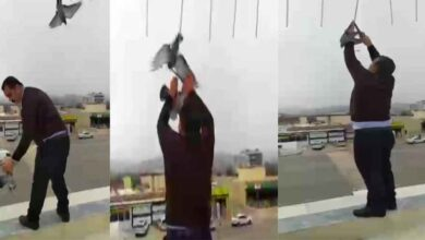 Photo of Urfa'da Asılı kalan güvercinleri canını hiçe sayarak kurtardı
