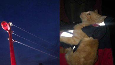Photo of Şanlıurfa'da Kedi Elektrik direğinde mahsur kaldı