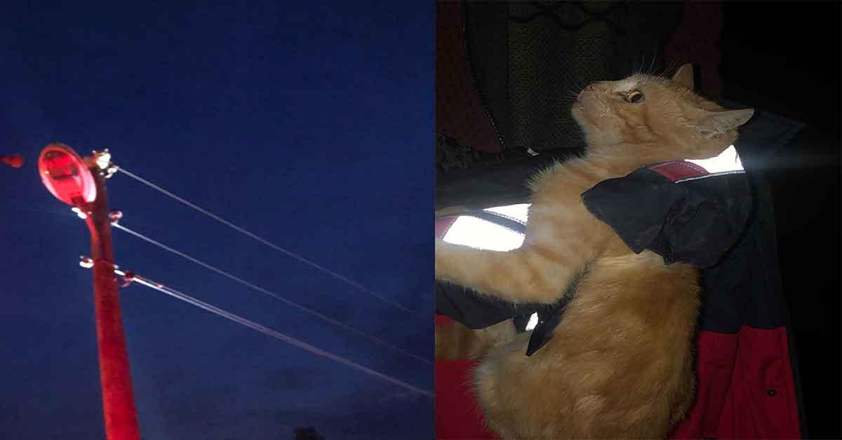 Şanlıurfa'da Kedi Elektrik direğinde mahsur kaldı