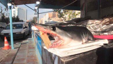 Photo of Urfalıların köpekbalığı şaşkınlığı