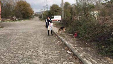 Photo of Kazancının yarısını sokak hayvanları için harcıyor