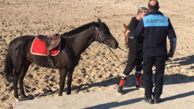 Photo of Urfa'da Yarışıp Sakatlanan Ata Belediyeden Engel