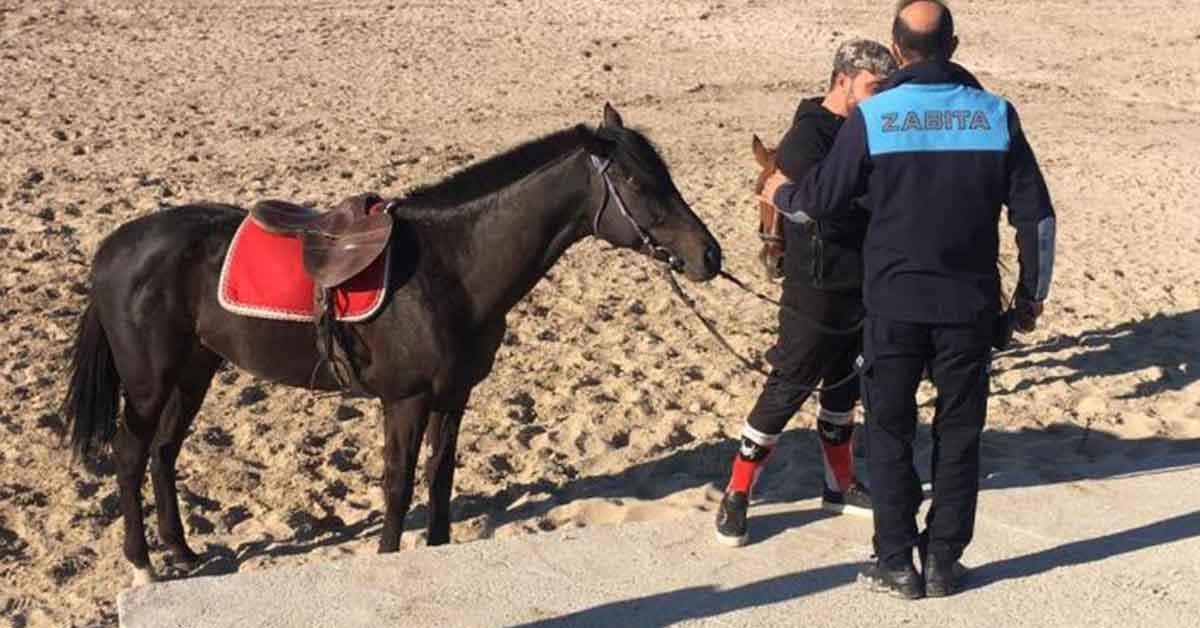 Urfa At Yarışı