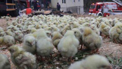 Photo of 56 Bin Civcivin Olduğu Çiftlikte Büyük Yangın