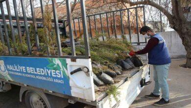 Photo of Haliliye Belediyesinden, kırsalda yeşil seferberliği