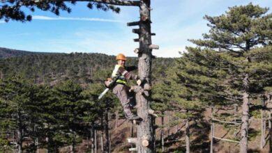 Photo of Ormanın sincap adamları ayda 15 bin TL kazanıyor