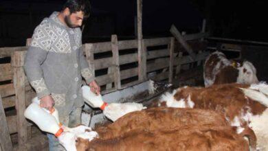 Photo of Çiftçilik yaparak kendi işinin patronu oldu