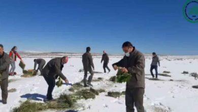 Photo of Şanlıurfa DKMP, Doğadaki Canlıları Unutmadı