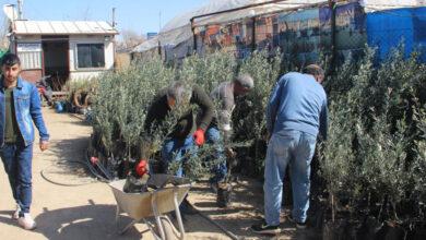 Photo of Şanlıurfa'da fidan satışları yeni yılda iki kat arttı