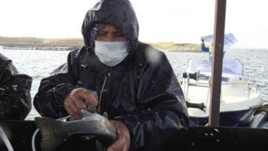 Photo of Şanlıurfa'da üretilen yerli aşılarla Milyonlarca balık tek tek aşılanıyor