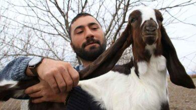 Photo of Urfa'dan Aldığı Keçilerle Sürü Sahibi Oldu