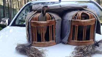 Photo of Urfa'da kaçak keklik avlayan şahıs suçüstü yakalandı