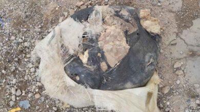 Photo of Şanlıurfa Valiliği'nden patlayıcılarla ilgili açıklama