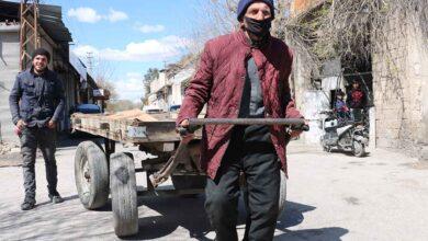 Photo of Urfa'da asırlık çınarlar 15 yıldır at arabası çekiyor