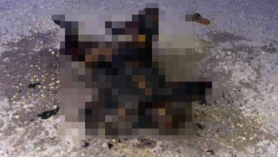 Photo of Şanlıurfa'da yanmış kadın cesedi bulundu