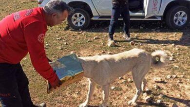 Photo of Şanlıurfa'da başına teneke sıkışan köpek kurtarıldı