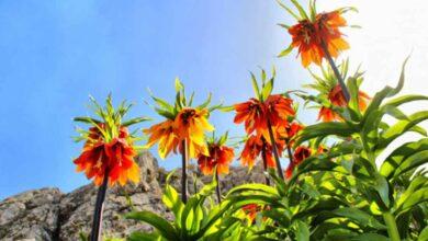 Photo of Bu çiçeği koparana 60 bin lira ceza