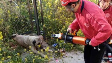 Photo of Urfa'da Demir korkuluğa sıkışan köpek kurtarıldı