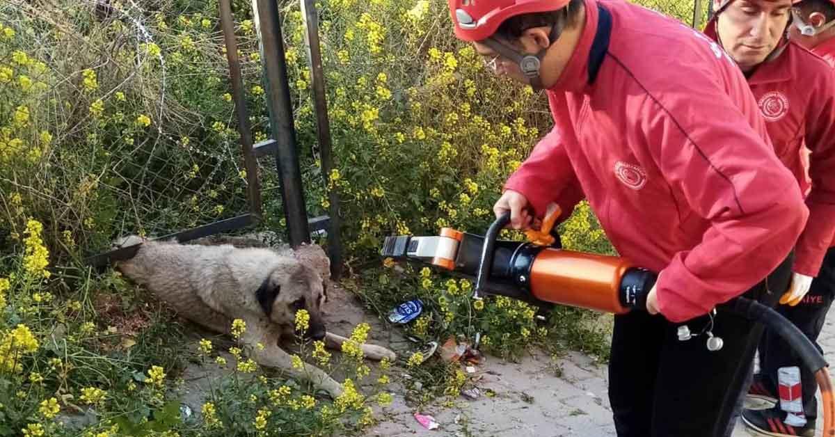 Urfa'da Demir korkuluğa sıkışan köpek kurtarıldı