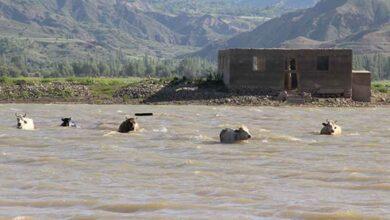 Photo of Alarm veren barajda Afrika'yı aratmayan görüntüler