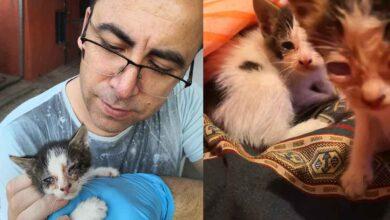 Photo of Yavru kedilere emniyet müdürü sahip çıktı