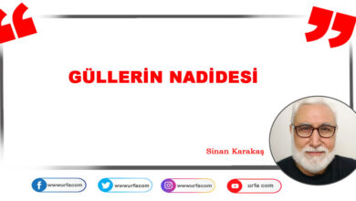 Photo of Güllerin Nadidesi