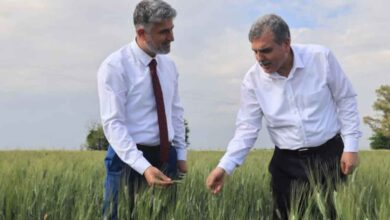 Photo of Makarnalık buğdaylar başak verdi