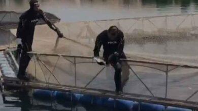 Photo of Urfa'da Dalgıç polisler ağlara takılan kuşları kurtardı
