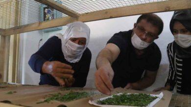 Photo of Urfa'da İpekböcekçiliği için çiftçiye tam destek