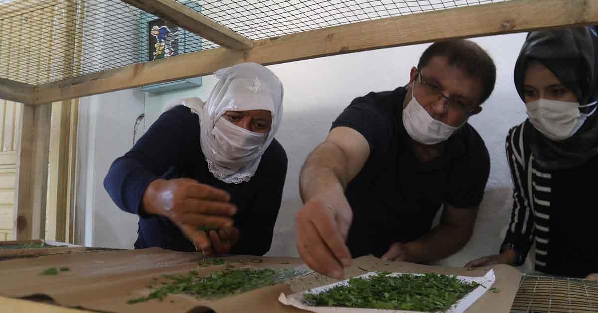Urfa'da İpekböcekçiliği için çiftçiye tam destek