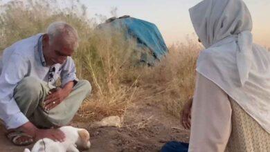 Photo of Urfa'da yaşlı çift ölen köpekleri için gözyaşı döktü
