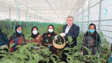Photo of Toplum Temelli Seracılık projesinde ilk hasat yapıldı