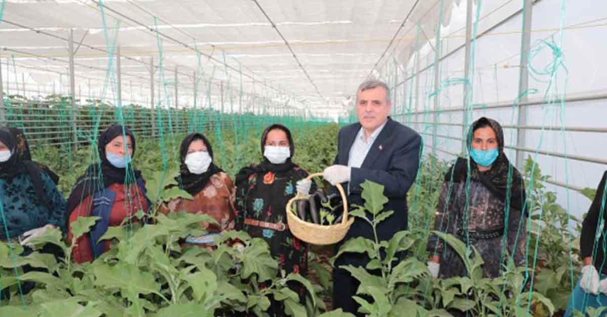 Toplum Temelli Seracılık projesinde ilk hasat yapıldı