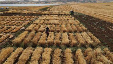 Photo of HRÜ'de Buğday Çeşit Geliştirme Çalışmaları Devam Ediyor
