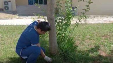 Photo of Urfa'da Doktor'un masasına bırakılan göbek bağını gömdü