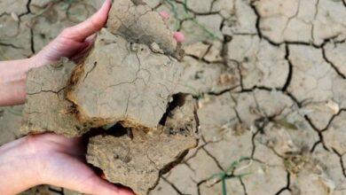 Photo of Şanlıurfa'da kuraklık hasar ödemesi yapılacak